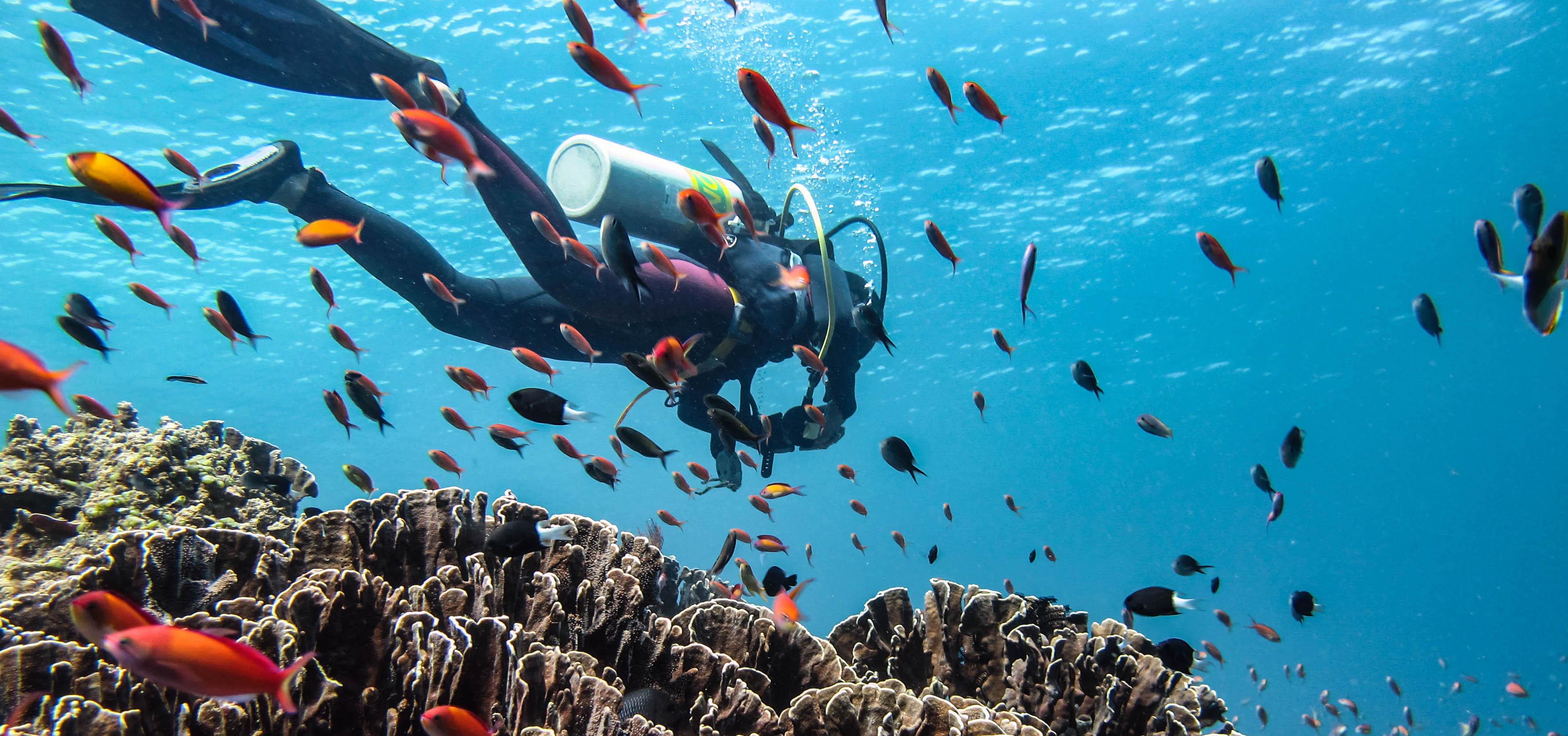 Top 5 Scuba Diving Sites in Gili Trawangan